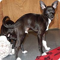 Adopt A Pet :: Poe - Homer, NY