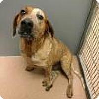 Adopt A Pet :: Rolo 4808 - Columbus, GA