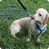 Adopt A Pet :: Tanner - Huddleston, VA
