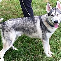 Adopt A Pet :: Cooper - Zanesville, OH