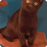 Adopt A Pet :: Clarence - Bensalem, PA