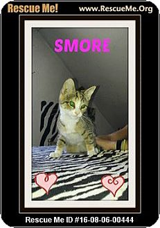 Domestic Shorthair Cat for adoption in Highland, Michigan - Smore