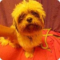 Adopt A Pet :: PRINCE - Upper Marlboro, MD