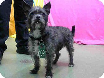 Terrier (Unknown Type, Medium) Mix Dog for adoption in San Bernardino, California - URGENT on 9/8 @DEVORE