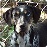 Adopt A Pet :: Dixie - Overland Park, KS