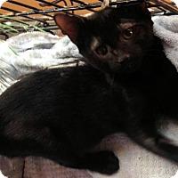 Adopt A Pet :: Cesar - Marlborough, MA
