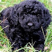 Adopt A Pet :: NICK(OUR