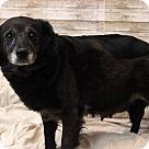 Adopt A Pet :: Adele