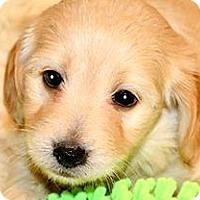 Adopt A Pet :: FREDRICK(OUR