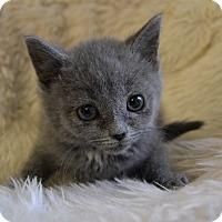 Adopt A Pet :: Remington - Michigan City, IN