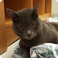 Adopt A Pet :: Wobbles - Grayslake, IL
