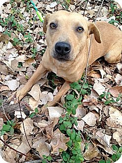 Shepherd (Unknown Type) Mix Dog for adoption in Blanchard, Oklahoma - Mona