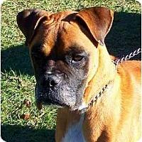 Adopt A Pet :: Hemi - Jacksonville, FL