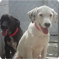 Adopt A Pet :: Daisy & Flower - Winter Haven, FL