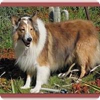Adopt A Pet :: Diego - Riverside, CA
