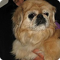 Adopt A Pet :: Lucky (in Chicago, IL) - Portland, ME