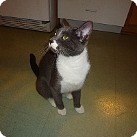 Adopt A Pet :: Artie (Artemis) - Dale City, VA