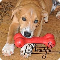 Adopt A Pet :: Daniel - Peachtree City, GA