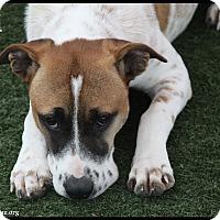 Adopt A Pet :: Kali - Rockwall, TX