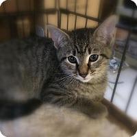 Adopt A Pet :: Simba - Barnegat, NJ