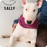 Adopt A Pet :: Sally-Pending Adoption - Omaha, NE