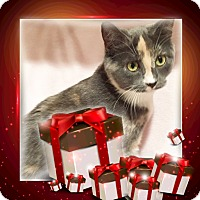 Adopt A Pet :: Kelsey - Colmar, PA