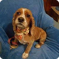 Adopt A Pet :: Wiggles  -Adopted! - Kannapolis, NC