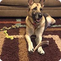 Adopt A Pet :: Karis - Dayton, OH