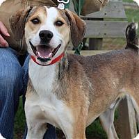 Adopt A Pet :: Donnie - Elyria, OH