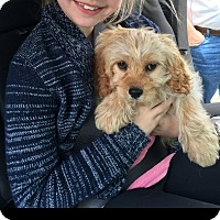 Adopt A Pet :: Oscar - Groton, MA