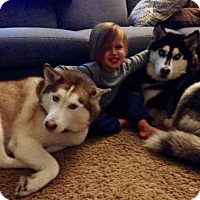 Adopt A Pet :: Deuce and Cochise - Crystal Lake, IL