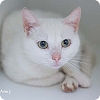Adopt A Pet :: Avery - Merrifield, VA
