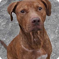 Adopt A Pet :: Eddie - Hardeeville, SC