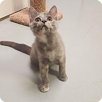 Adopt A Pet :: Eleonore - Fort Riley, KS