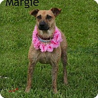Adopt A Pet :: Margie - Houston, TX