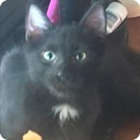 Adopt A Pet :: Abu - Waggaman, LA