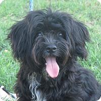 Adopt A Pet :: Betty Boop - Turlock, CA