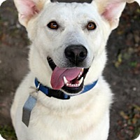 Adopt A Pet :: Lola - Mt. Prospect, IL