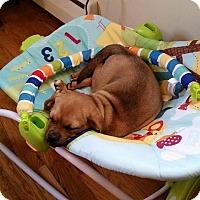 Adopt A Pet :: Gigi - Enfield, CT