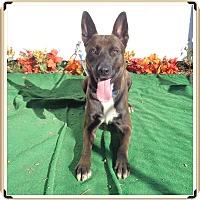 Adopt A Pet :: ROLAND - Marietta, GA