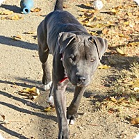 Adopt A Pet :: Smokey - Gardnerville, NV