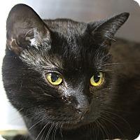 Adopt A Pet :: Ranger - Sarasota, FL