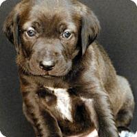 Adopt A Pet :: Almora - Newland, NC