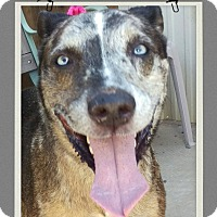 Adopt A Pet :: Jesse - Apache Junction, AZ
