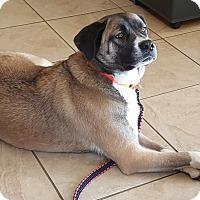 Adopt A Pet :: Mandy - Bartonsville, PA