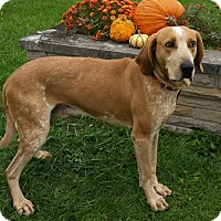 Adopt A Pet :: Winston - Wapakoneta, OH