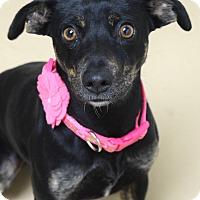 Adopt A Pet :: Slinky - Dublin, CA