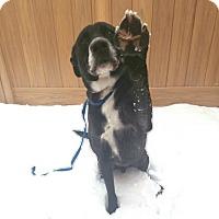 Adopt A Pet :: Dexter - Carson City, NV