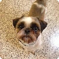 Adopt A Pet :: Beaker - Aiken, SC