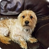 Adopt A Pet :: Max Turner - Urbana, OH